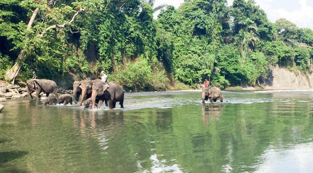 Die andere Elefantengruppe